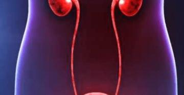Инфекции мочевыводящих путей (ИМП): все что о них нужно знать