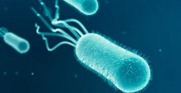 Связь между кишечной палочкой и инфекциями мочевыводящих путей.